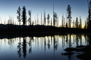 Symmetry view of silhouette trees by lake against clear sky during dusk