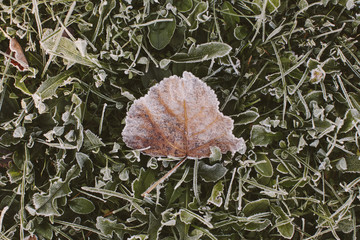Close-up of frozen leaf on plants at field