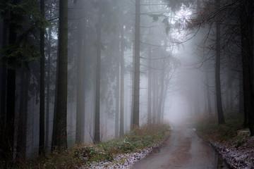 Wald / Waldweg im Nebel
