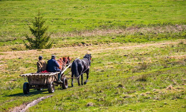 Pylypets, Ukraine - May 01, 2017: traffic in mountainous rural area in summer. wooden cart with two horses and two men ridge uphill the grassy slope