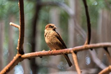 Beautiful bird sitting on a tree branch