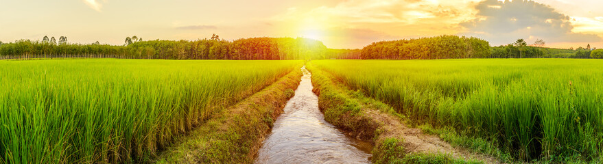 Foto op Plexiglas Platteland Rice field with sunrise or sunset in moning light