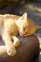 Cat sleeping outdoors under rays of sun