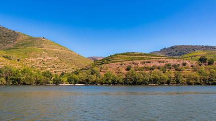 Vallée du Douro vignes vignoble Porto Portugal