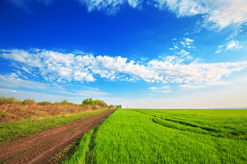 Fototapete - Road through the green field of grass and blue sky with clouds. Beautiful spring landscape.