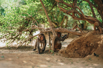 Monkeys Playing Inside A Park
