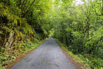 narrow mountain road surrounded by trees and mossy rocks in a typical Atlantic oak forest in Galicia,