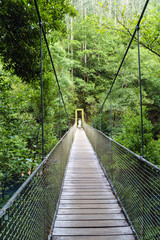Suspension bridge of rope and wood on the river Eume in a very leafy forest. Zone very wooded and very green.