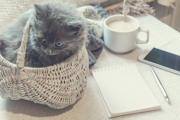 Gray fluffy kitten in a basket, cup of coffee and a phone on a white surface