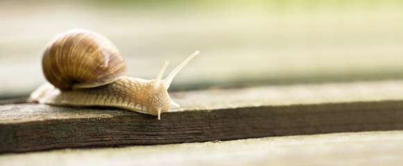 Website banner of a crawling snail - slow web concept