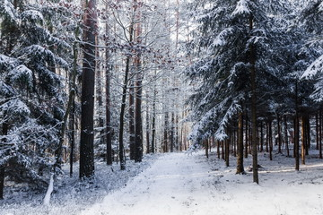 """Countryside road in winter forest in national park """"Sumava"""", Czech Republic."""