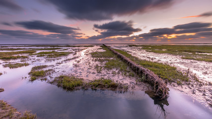 Wall Mural - Wadden sea Salt marsh at sunset