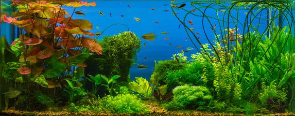 Tropical fresh water aquarium