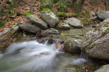 A beautiful forest stream cascading over mossy rocks