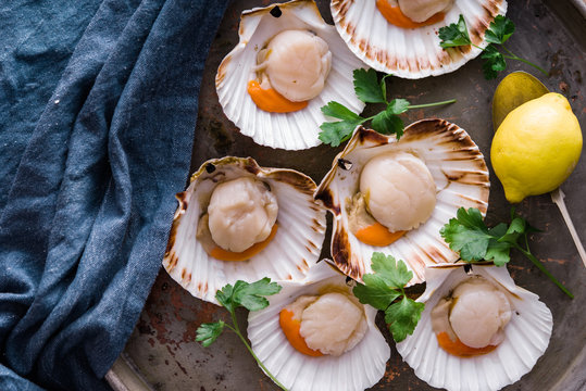 Fresh,raw scallops in shell on metal tray,ready to be prepared for cooking.