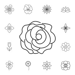 abstract type of carnation flowers Line Icon. Set of beautiful flower icons. Signs, outline eco collection, simple thin line icons for websites, web design, mobile, info graphics