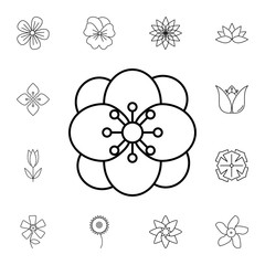 abstract type of flowers Line Icon. Set of beautiful flower icons. Signs, outline eco collection, simple thin line icons for websites, web design, mobile app, info graphics