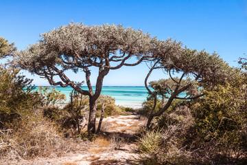 Thorny and dry vegetation