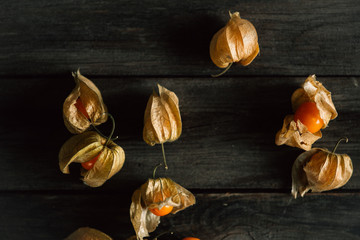 details of physalis