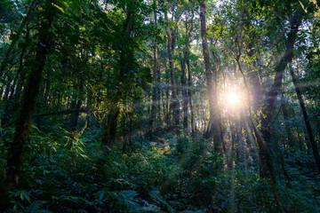 Kew Mae Pan Nature Trail Trekking trail leading through jungle