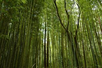 Deurstickers Bamboo 竹