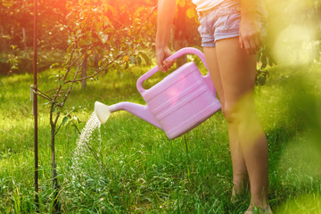 Fotobehang The girl is watering a violet apple tree in a green garden, close-up, copy space