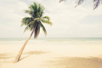 Beautiful coconut palm tree at  the beach in summer