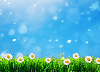 green grass with flowers background