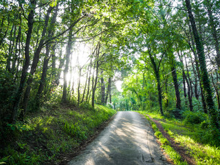 road in green forest with sun beams