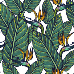 Seamless pattern of exotic plants. Strelitzia. Flowers and leaves. Background.