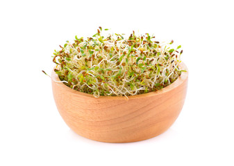Fresh alfalfa sprouts and cress isolated on white background