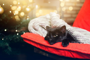 cute black cat peacfully sleeping on red chair, christmas tree and fire burning in fireplace in the background - hygge concept