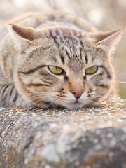 気怠そうな猫
