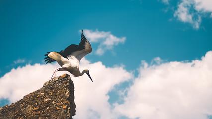 bird takeoff in nature