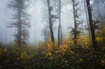 forest landscape with vivid autumn colors