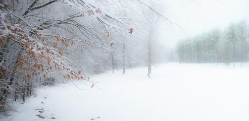 Winter Woods in Mist