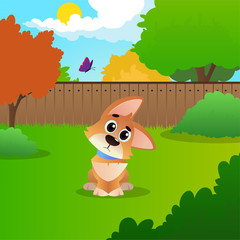 Wondering cartoon corgi sitting on backyard. Sunny summer landscape with green meadow, bushes, trees, wooden fence, blue sky and flying butterfly. Flat vector design