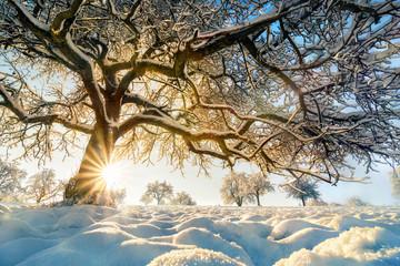 Winter Landschaft mit der Sonne hinter einem schönem Baum