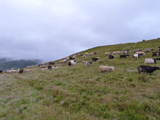 pastures of sheep on top of mountain ranges.