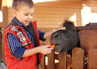 Little boy feeding pony in petting zoo
