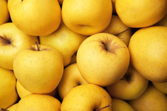 Ripe yellow apples, closeup