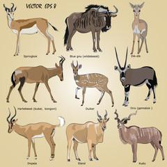 a set of realistic African antelope - oryx, eland, hartebeest, dik-dik, impala, springbok, wildebeest, duiker, kudu, blue gnu