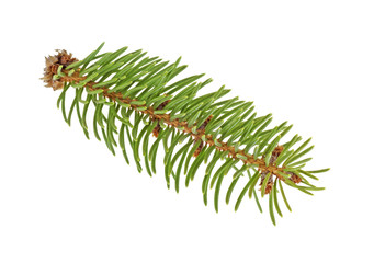 Little fir tree branch on a white background