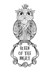 Owl bird sitting on sign frame with inscription queen of the night on white background vector image. Wild night owl bird hand drawn vector illustration