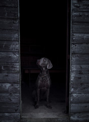 Dog in a cabin