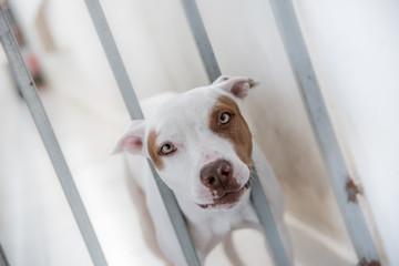 Cachorro preso em grade de residência