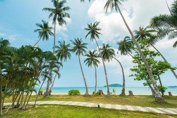 Wall Mural - Beautiful exotic beach with coconut tree palm located Koh Kood Island, Thailand