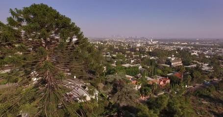 Fotobehang - Low altitude aerial flight pine tree Hollywood Hills Los Angeles skyline. 4K.