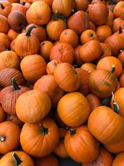 pumpkins in a picking bin at an autumn festival
