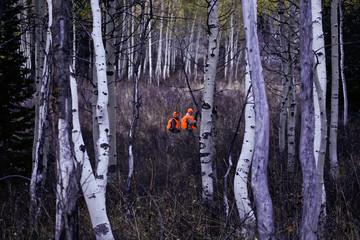 Hunters clad in orange walking through aspens